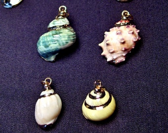 SALE!!  Coastal Beach Inspired Jewelry -  Natural Seashell w/ Gold Trim  Pendant Necklaces
