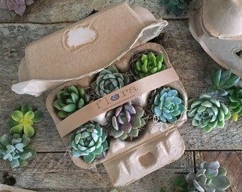 Succulent Cutting Starter Kit