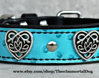 Blue Celtic Heart Collar Is A 1.75'' Black Base With A 1.25' Turquoise Leather Adorned With Celtic Heart Concho's And Chicago Screws.