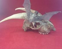 Taxidermy Bat and Skull Display-macabre/witch/goth/oddity