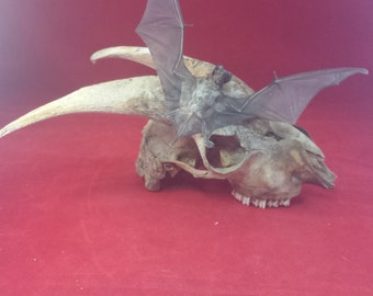 Taxidermy Bat and Skull Display-macabre/witch/goth/oddity