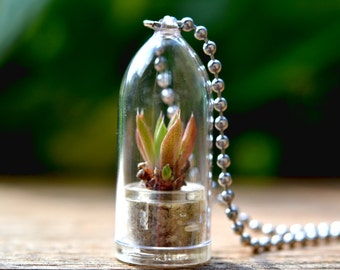 Scarlet Dragon Live Terrarium Necklace / Nature Jewelry / Nature Necklace / Succulent Plant
