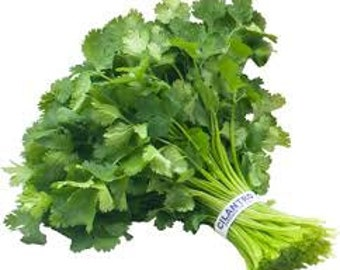 CILANTRO HERB SEEDS 25 Fresh seed ready to plant in your garden or pots