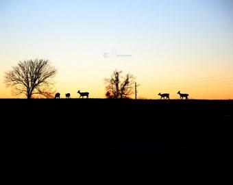 Deer Ridge 8x10
