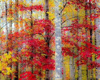Tree Picture, Autumn Trees, Red Tree, Autumn Photo, Red Leaves, Yellow Leaves, Autumn Wall Art, Fall Photography, Forest Photo, Autumn Woods