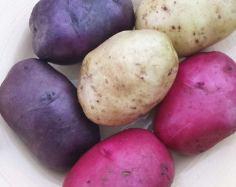 Red White Blue Seed Potatoes Mix 2 Lbs. Certified Organic Potato Collection- Spring Shipping Non-GMO