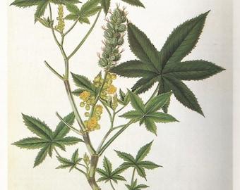 Castor Oil Plant Botany Flower Print 1980 Botany colour print Wall Art Home Decor Vintage Print Modern Print