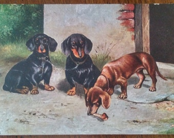 Vintage Dachshund Dogs Post card Unused printed in Germany artist signed