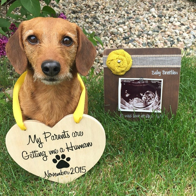 Baby Announcement Wooden Heart for Dogs My Parents Are by ...