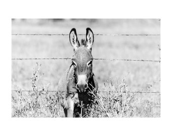 Always Greener Fine Art Photography Miniature Donkey Black and White Quirky country home decor Burro Southwest Barbed wire fence Funny art