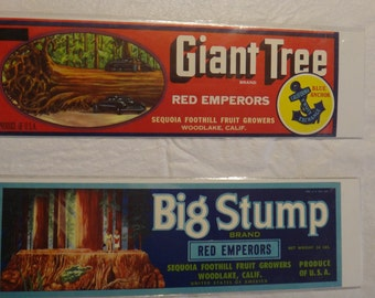 2 Original fruit crate label - Giant Tree and Big Stump - red emperor grapes