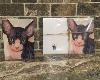 Stationary Set Hairless Cats, Sphynx Cats, Gift sets, Linen note cards, Blank cards, Cats and Kittens, Photography cards