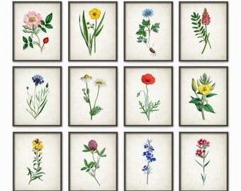 Wild Flower Art Print Set Of 12 - Vintage Flower Decor - Botanical Plant Decor - Home Decor - Kitchen Decor - Flower Wall Art - AB599