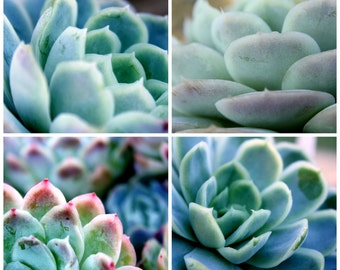 Succulent Print Set / Set of 4 Prints / Nature Photography / Home Decor / Succulent Art / Mint Print Set / Cacti Photo Set / Living Room