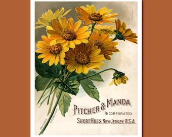 Pitcher & Manda Seed Catalogue Print, Botanical Catalogue, Botanical Art Print, Catalogue Cover Illustration, Flower Décor, F005