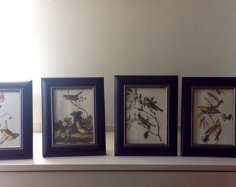 Set of Four Vintage Bird pictures from Audubon Book, Framed, Excellent Condition