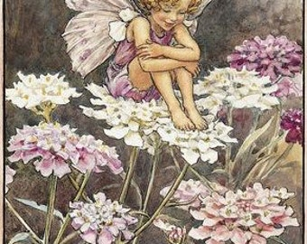 The Candytuft Fairy - Counted cross stitch pattern in PDf format
