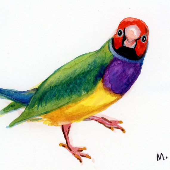 "Lady Gouldian - Watercolor - 4"" x 4 1/2"""