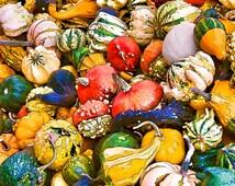 Vegetable Print, Gourds, Pumpkins, Kitchen Art, Gift for Vegetarian, Veggies, Food Print, Restaurant Decor, Food Photography, Kitchen Decor