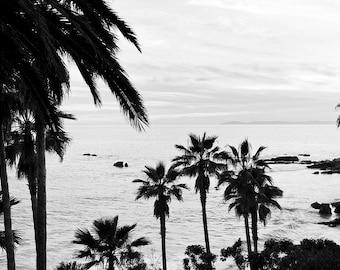 Palm trees and ocean photography. Large black and white beach photo, California Coast seascape wall art. Coastal wall decor. Palm trees