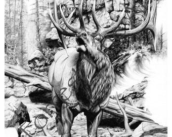 Elk drawing of American Rocky Mountain elk pencil drawing of bugling bull elk print nature wildlife western pencil print drawing of elk