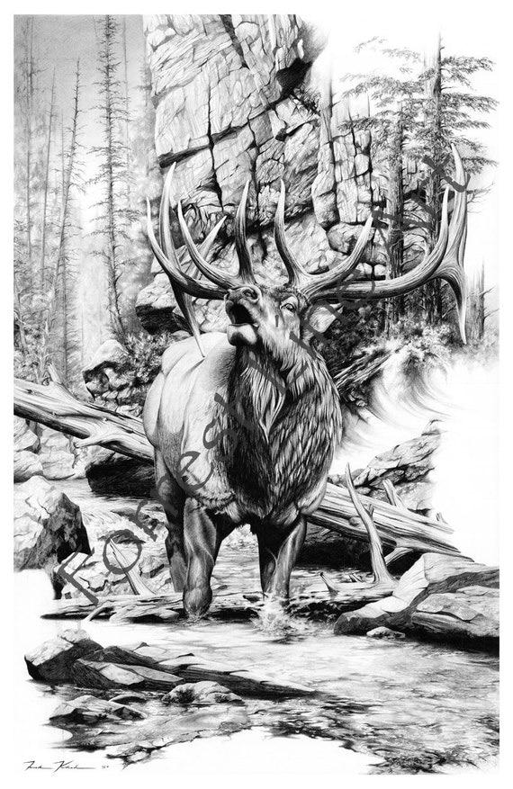 Elk drawing of American Rocky Mountain elk pencil by 4sLine