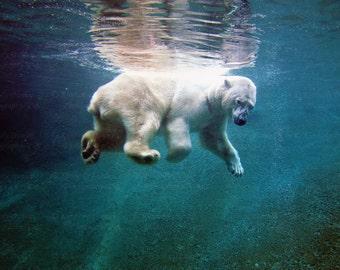 Polar Bear Photograph {Nature Photo, Wildlife Photography, Blue Green Wall Art, Home Decor, Large Picture, Nursery Print, Office, Man Cave}