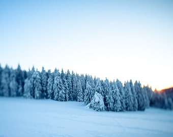 Winter forest, Thuringia