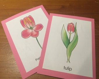 Parts of a Flower (Monocot) Montessori Booklet OR Cards