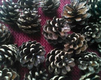 Pine Cones x20