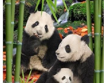 "PANDA Cotton Velour Fiber Towel Pandas in Bamboo Beach Towel 30"" x 60"" -  Personalized Beach Towel"