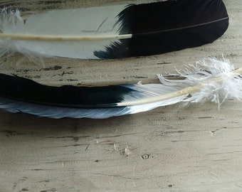 1 Imitation Eagle Feather