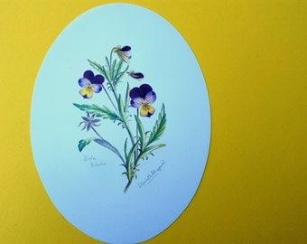 Vintage Print by Elizabeth A.Sheppard, Viola Tricolor, Botanical Print, 70s Print with Violets,Oval Print, Floral Print