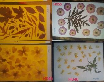 Pressed flowers, pressed daisies, dried flowers, dried pressed flowers, oshibana, flower embelishment #H043 #H055 #H045 #H046