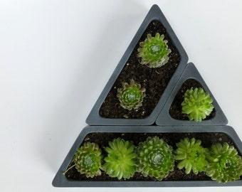 Concrete Succulent Planter Set-- Triangular