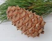 Pine Cone, Pine Cones, Cedar Cone with nuts, Ornament, Wedding Decoration, Christmas Gift, Cristmas Decor, Health Products, Cedar Cones