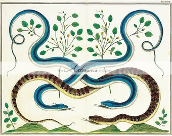 Instant Download Printable Art - Snakes Serpents Antique Art Image - Blue Brown Snakes Reptiles Leaves - Altered Art Paper Crafts Scrapbook