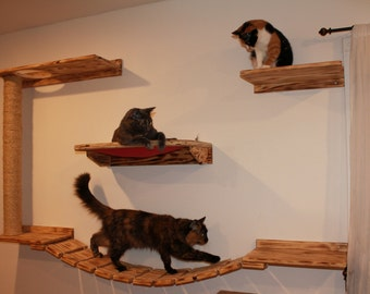 Kitty Play/ Relax Center