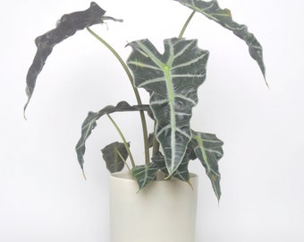 Modern Planter No. 4
