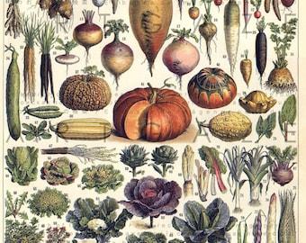 French Antique Botanical Digital Print 19thC Vegetables Chart Vintage Vegetables Download Veggies Print Larousse