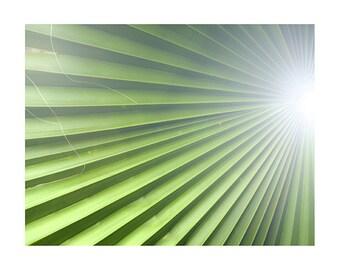 Lush tropical bright green Tulum palm frond photograph. Beachy boho wall art. Pantone Color of the year Greenery decor print!