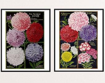 Floral Art, Art Print Flower, Flower Seed Packets, Magazine, Catalog, Lithograph Print, Antique, Asters, Phlox, Flower Illustration