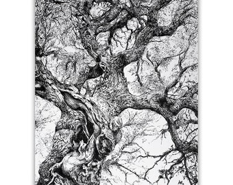 Holm Oak Tree / Original handmade illustration / Pen on paper A3 / Trees from the Forest