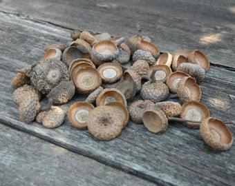 Natural Acorn Tops , set 1