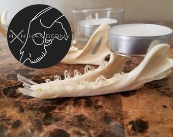 Gray fox jawbone crystal teeth tealight holder
