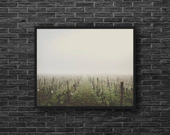 Misty Fields Photography - Vineyard Photo - Country Landscape Photo - Rural - Nature Photography - Nature Wall Decor - Country Wall Decor