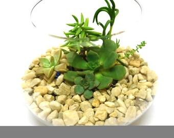DIY Terrarium Kit, Small Bowl Terrarium DIY Gift, Green Gift, Succulent Terrarium, Indoor Garden, Miniature Garden, Handmade Gift, sphere jr