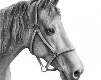 Custom Horse Drawing, Horse Portrait, Custom Pet Portrait, Horse Decor, Charcoal Portrait, Original Drawing, Personalized Portrait