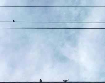 Ocean City NJ - birds - wire - photography - seashore - summer - blue sky - clouds - skies