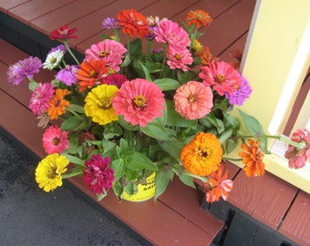 Vineyard Haven Florals, Flowers in Print Photograph Colorful, bright, sunny zinnia